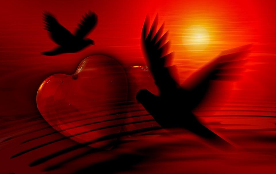 Hjärta, Dove, Silhouette, Kärlek, Lycka Till, Abstrakt