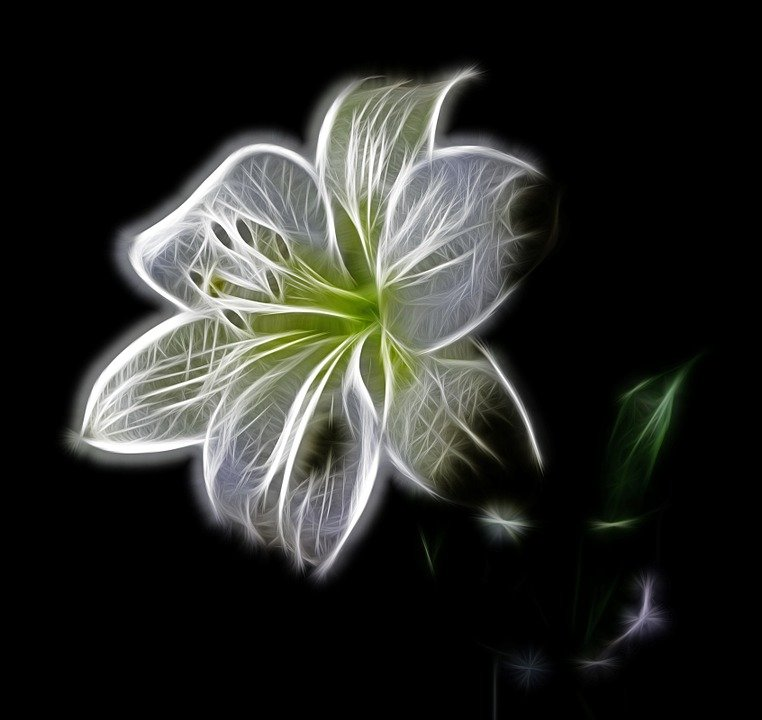 free photo lily, flower, blossom, bloom  free image on pixabay, Natural flower