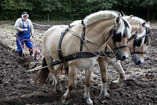 Horses, Plow, Plowing, Working, Equine
