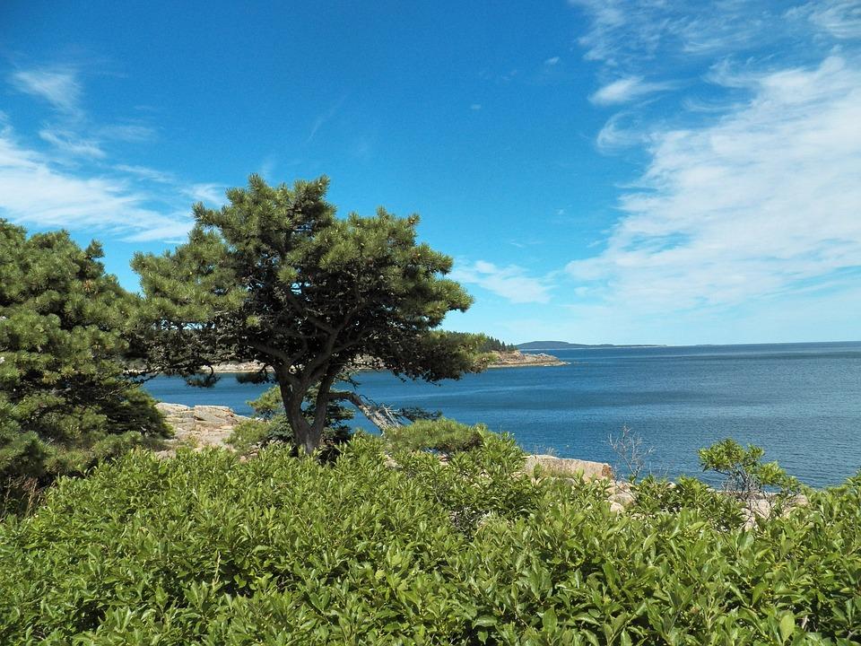 ocan mer leau arbre arbres ciel roches - Arbre Ciel