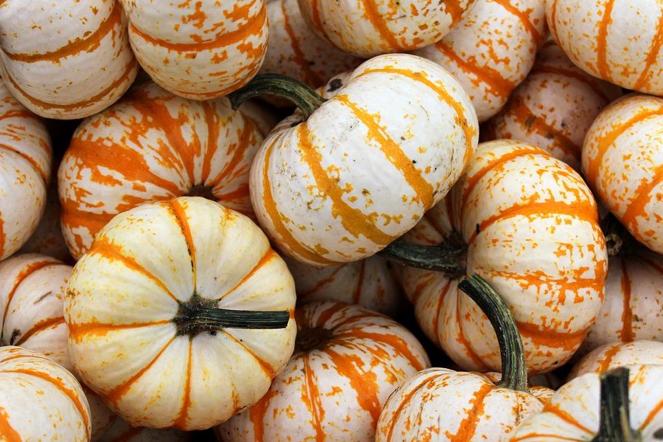 White Orange Pumpkin Free Photo On Pixabay