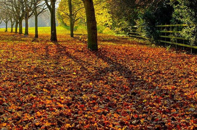 Autumn Season Leaves · Free Photo On Pixabay