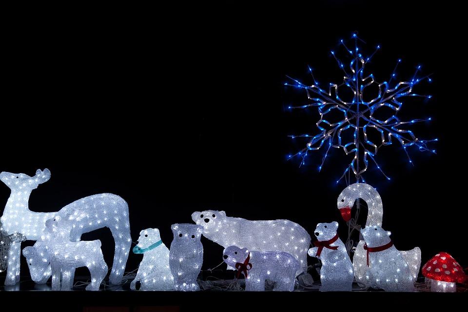 Animals Bear Christmas · Free photo on Pixabay