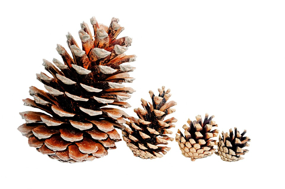 Gratis Foto Achtergrond Grote Brown Kerst Gratis