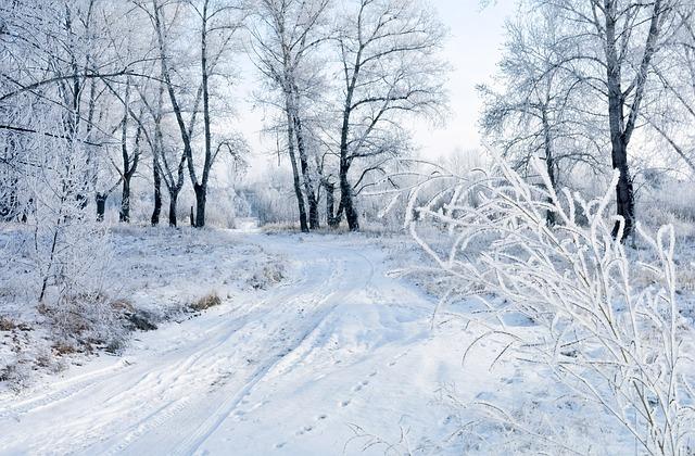 Photo gratuite neige hiver paysage nature gel image - Paysage de noel gratuit ...