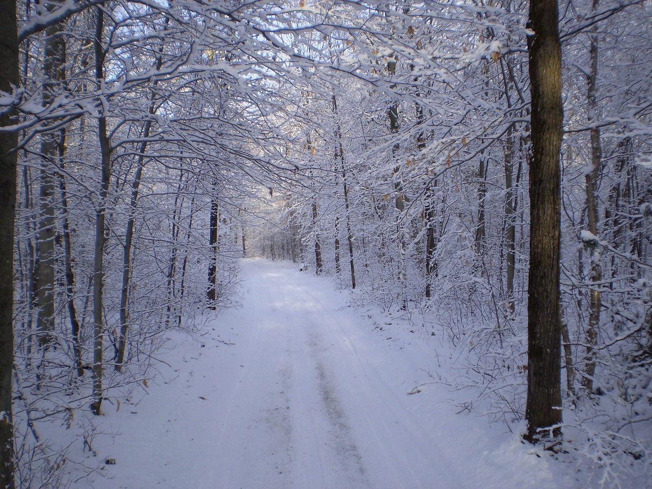 Снежная тропинка фото зимние