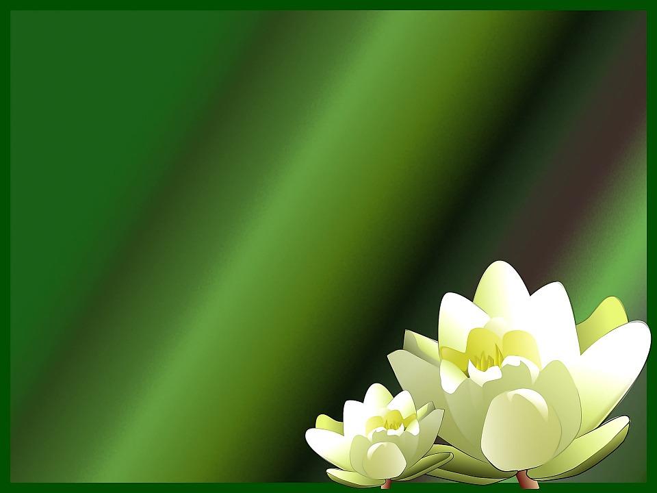 บัวเผื่อน ดอกไม้ พื้นหลัง · ภาพฟรีบน Pixabay