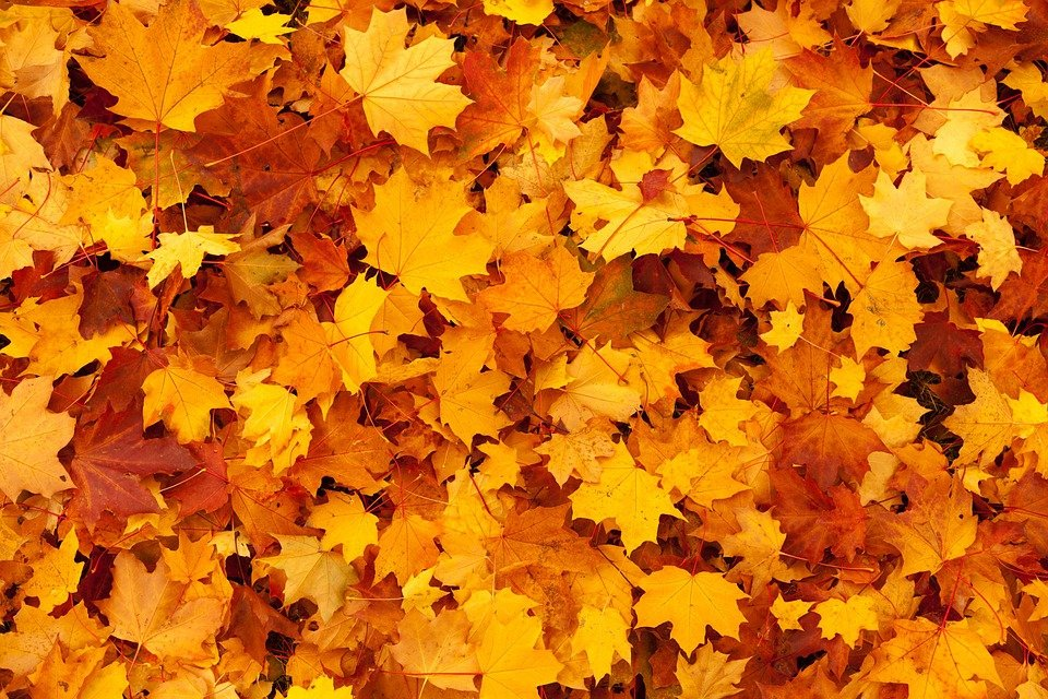 autumn background color free photo on pixabay