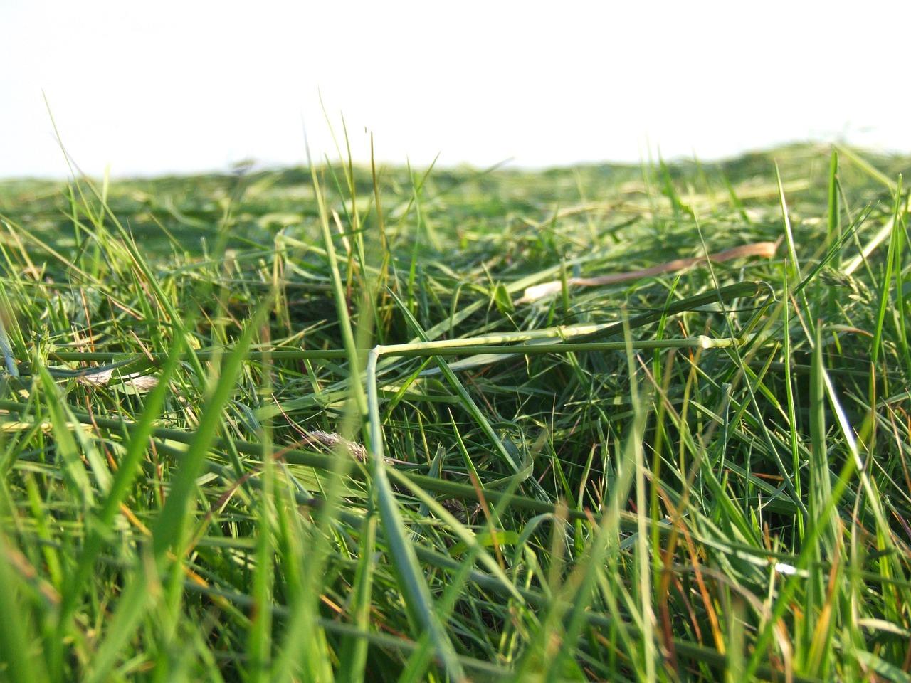 трава скошена картинка гироскопического типа
