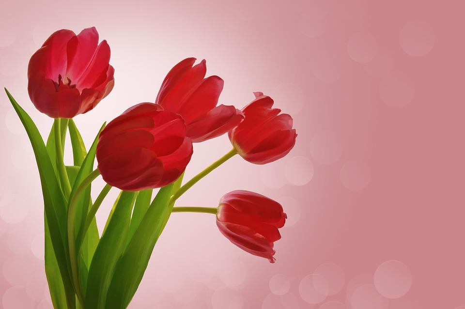 Kvety Tulipany Valentine Fotografia Zdarma Na Pixabay