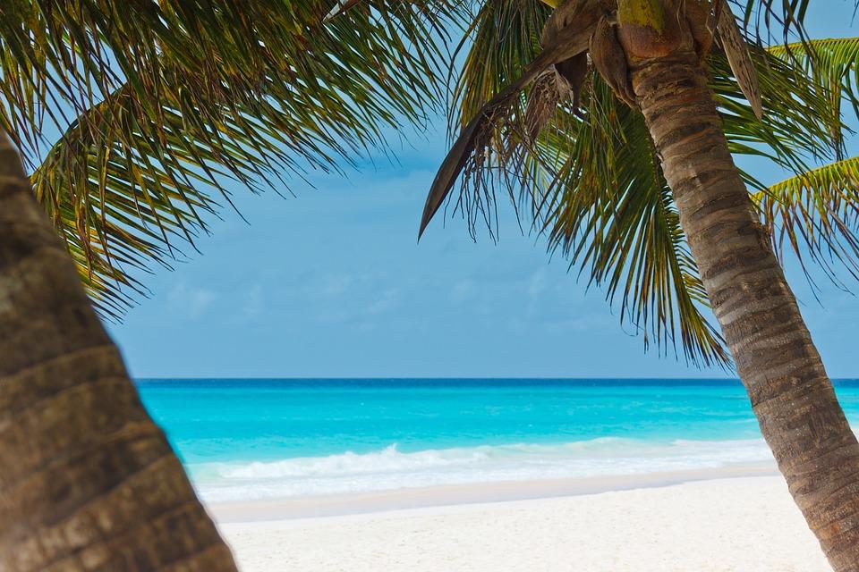Beach, Bella, Blu, Costa, Panorama, Ocean, Palma, Palme