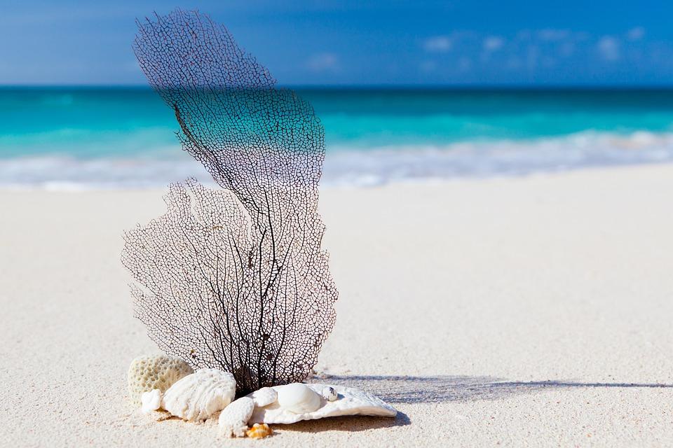 ビーチ, カリブ海, 青, 美しさ, コンセプト, エキゾチックです, 自然, 海, リラックス, 砂, 貝殻