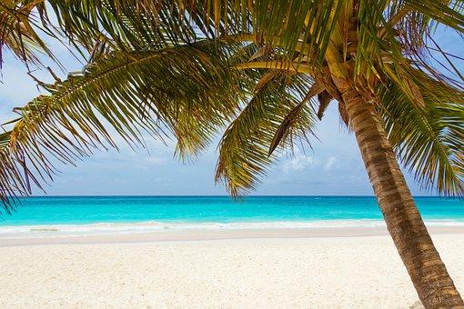 ビーチ, 美しい, 青, 海岸, 風景, 海, ヤシの木, 楽園, リラックス