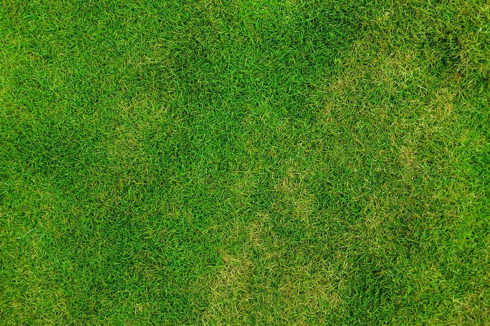 Grass, Lawn, Field, Meadow, Grassy, Background, Green