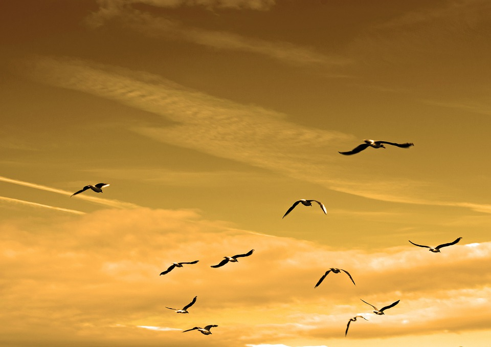 鳥, 群れ, 空気, 動物, 羽, フライト, フライ, 自由, カモメ, 天, 高, 自然, 平和, 鴎