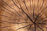 surowiec drzewny, drewno, drzewo dziennika