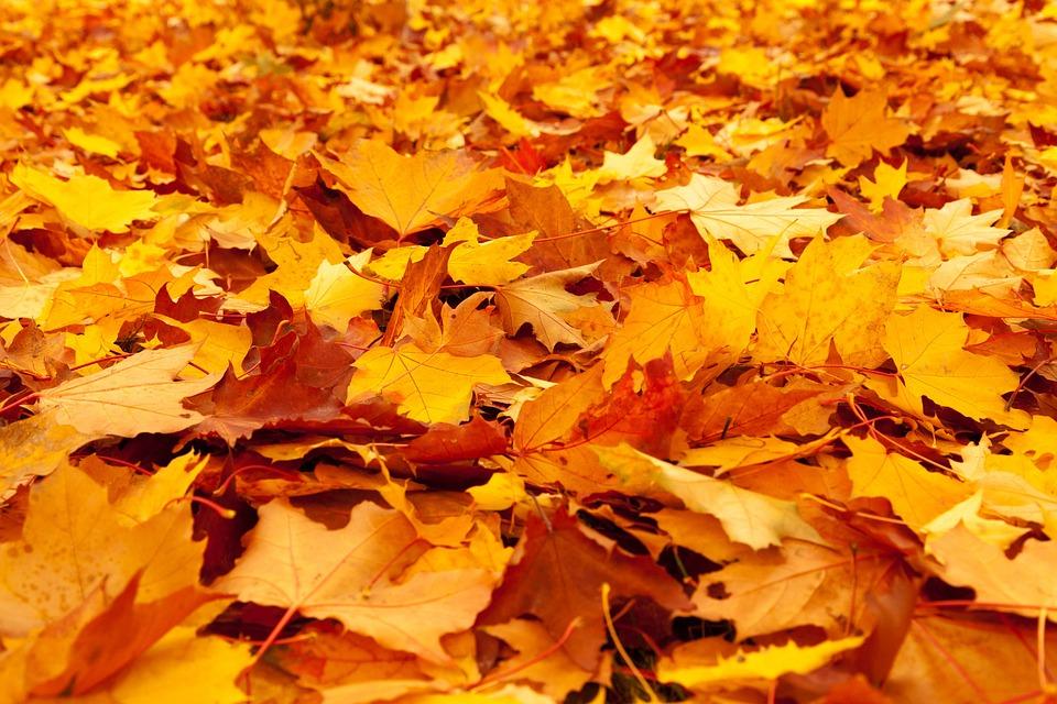 秋, 秋の紅葉, 葉, ゴールド, カエデ, 自然, シーズン, 季節, オレンジ自然