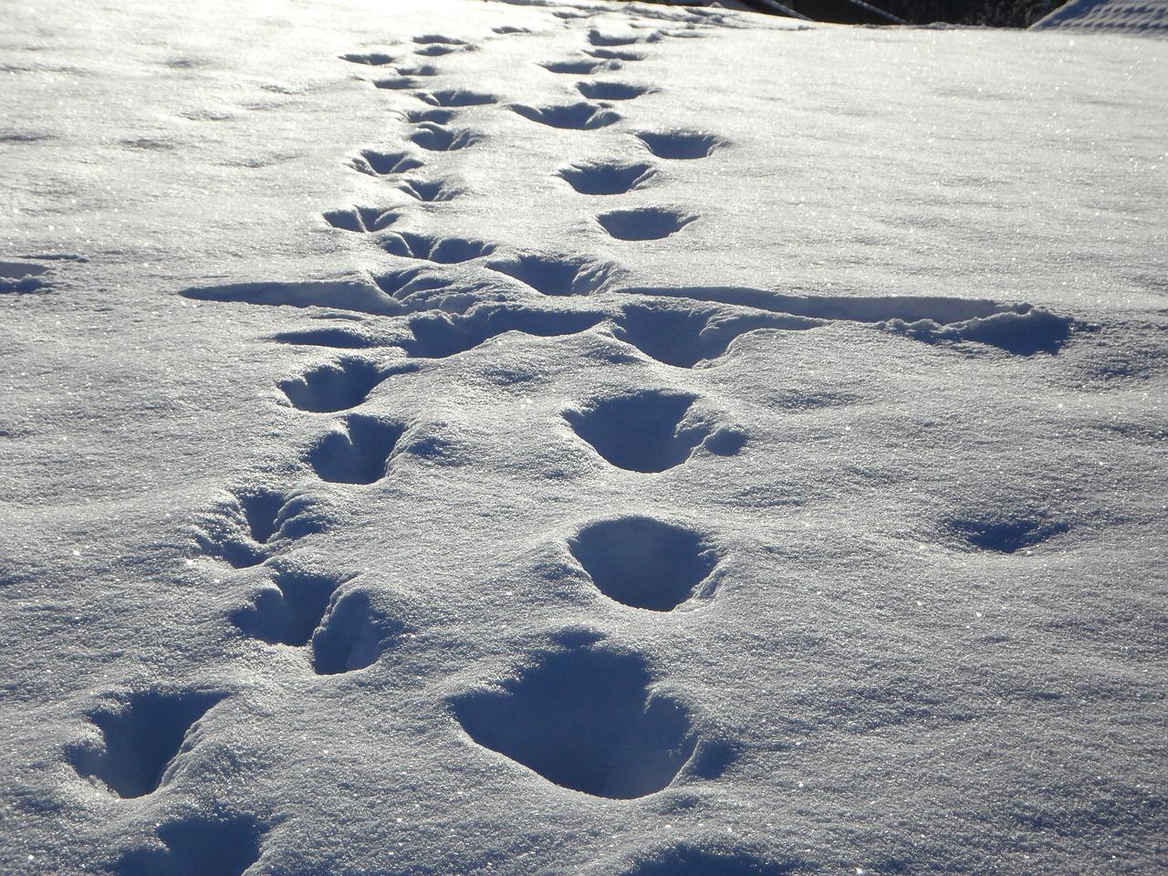 следы на снегу мужчины фото является