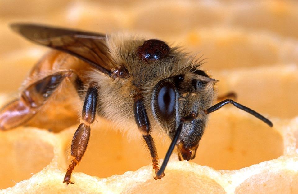 Photo gratuite abeille abeilles nid d 39 abeille image - Nid d abeille castorama ...