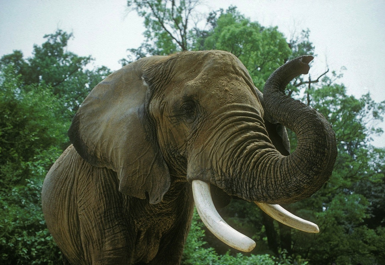 картинки слоны хоботом вверх танцовщицам