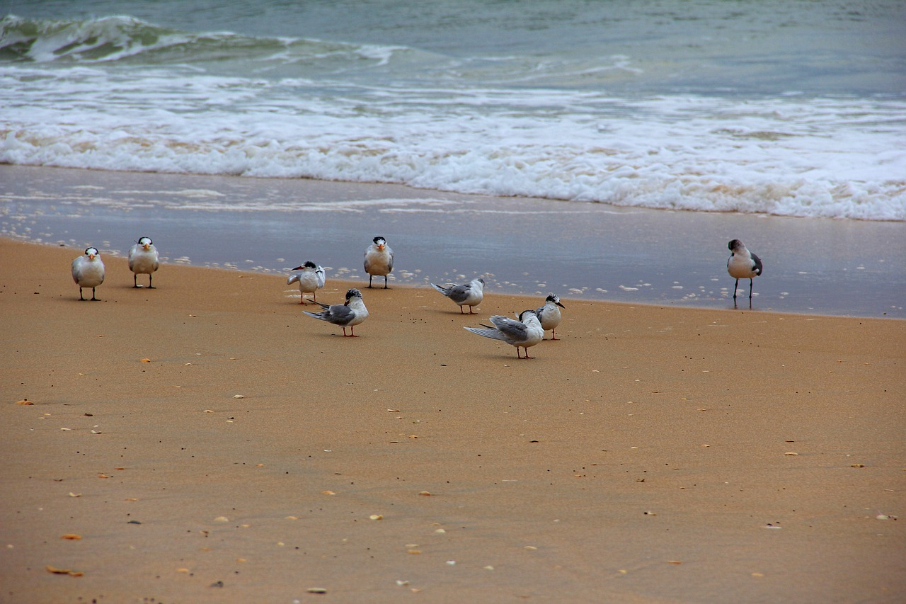 183 best Seagulls images on Pinterest Beautiful birds, Gull and The Photos of seagulls on the beach