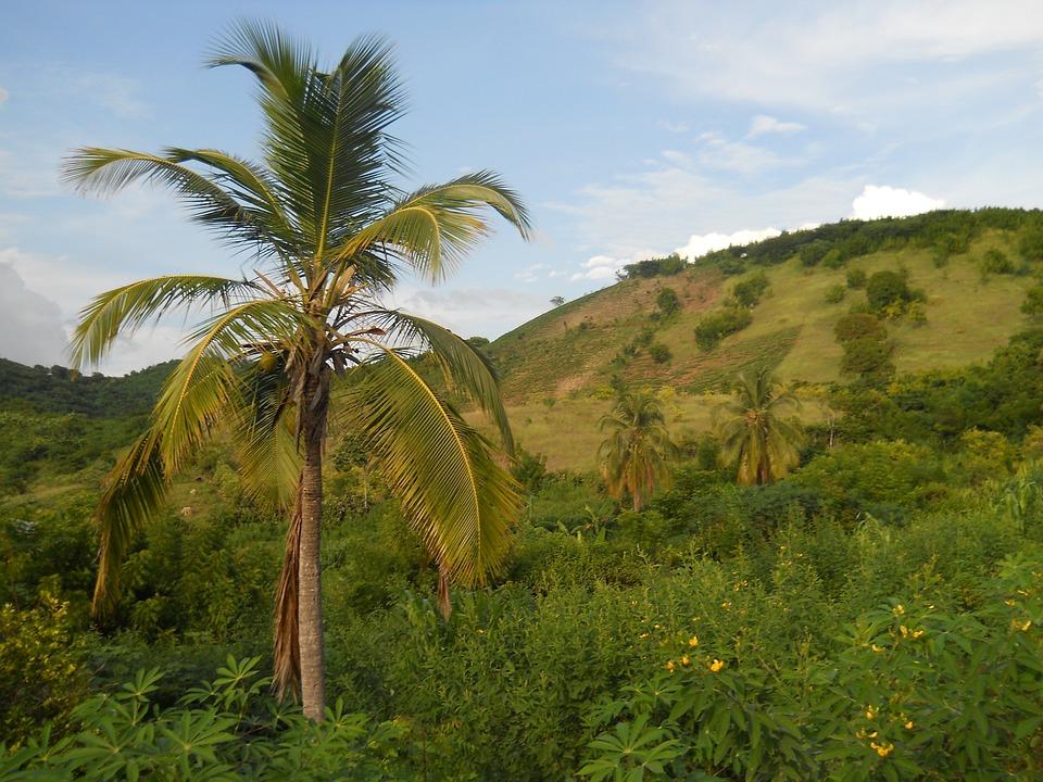 Haiti, Krajobraz, Góry, Roślin, Trawa, Natura, Poza