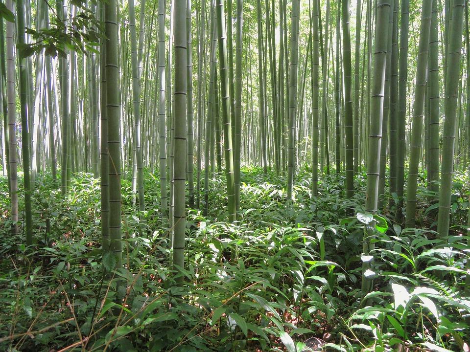 Kyoto Japan Bambus Gratis Foto Pa Pixabay