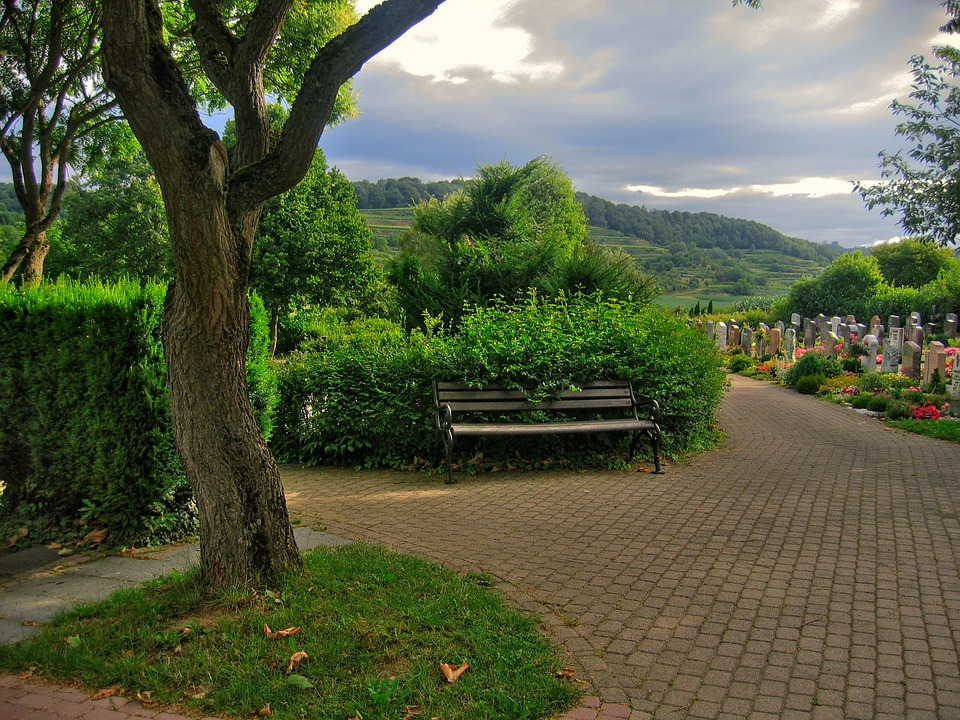 green trees with bench