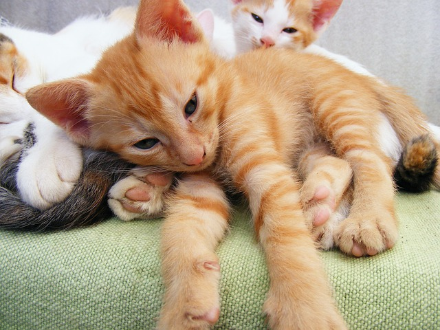 Little Cat Kitten Jeux Com
