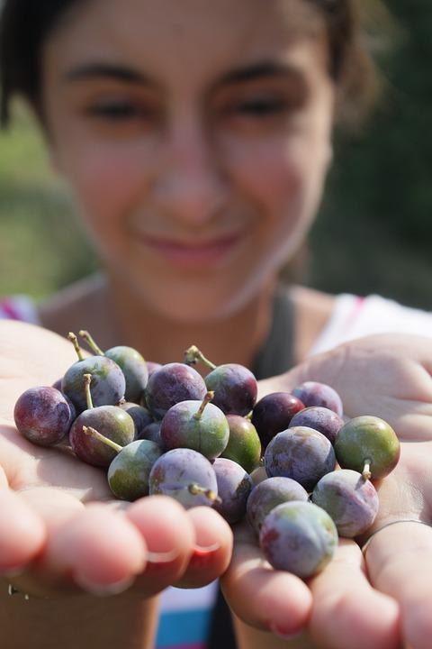 Baies, blackthorn, bleu, myrtilles, fille, prunus