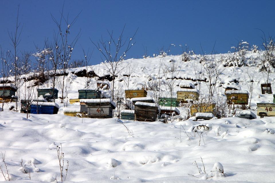 Рамки с мёдом похитили с дачного участка в Толочинском районе
