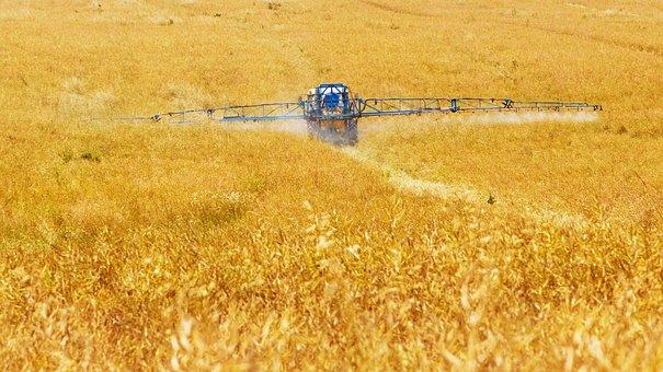 Nedvisning af korn med glyphosat
