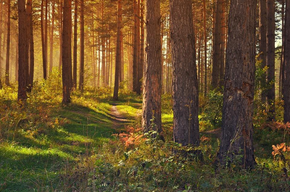 В Мари-Турекском районе восстановили леса на площади 59 га