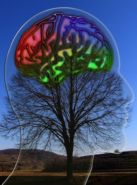 human, brain - free images on pixabay, Cephalic Vein
