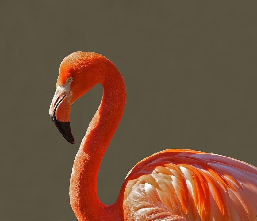 flamingo bird roz fotografie gratuită pe pixabay