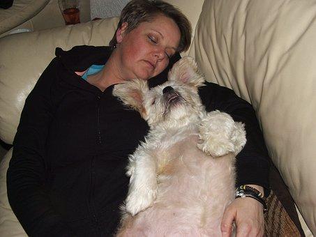 Pets, Dog, Sleeping, Animal, Cute
