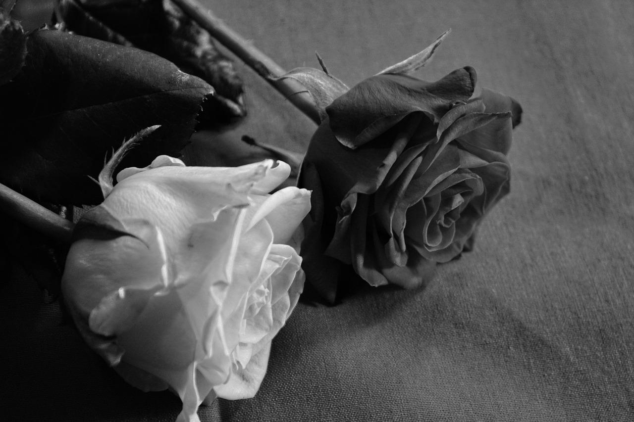 дамы настолько картинки белым по черному о любви маша