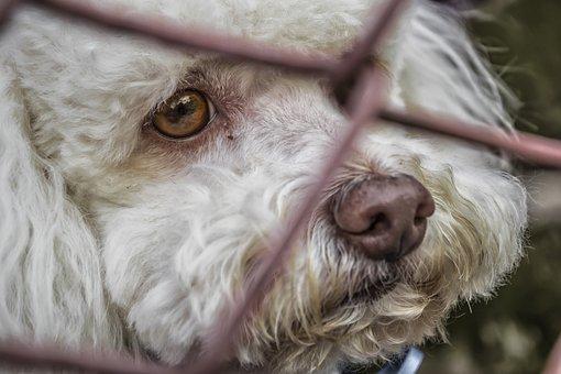 Cão, Trancado, Corrida, Branco, Animais