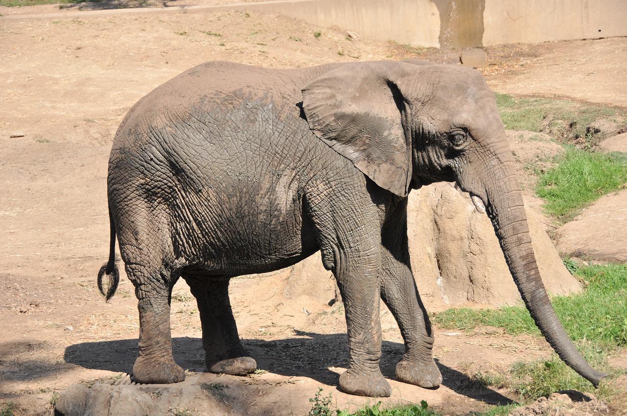 Fotos de animales en zoologicos 33