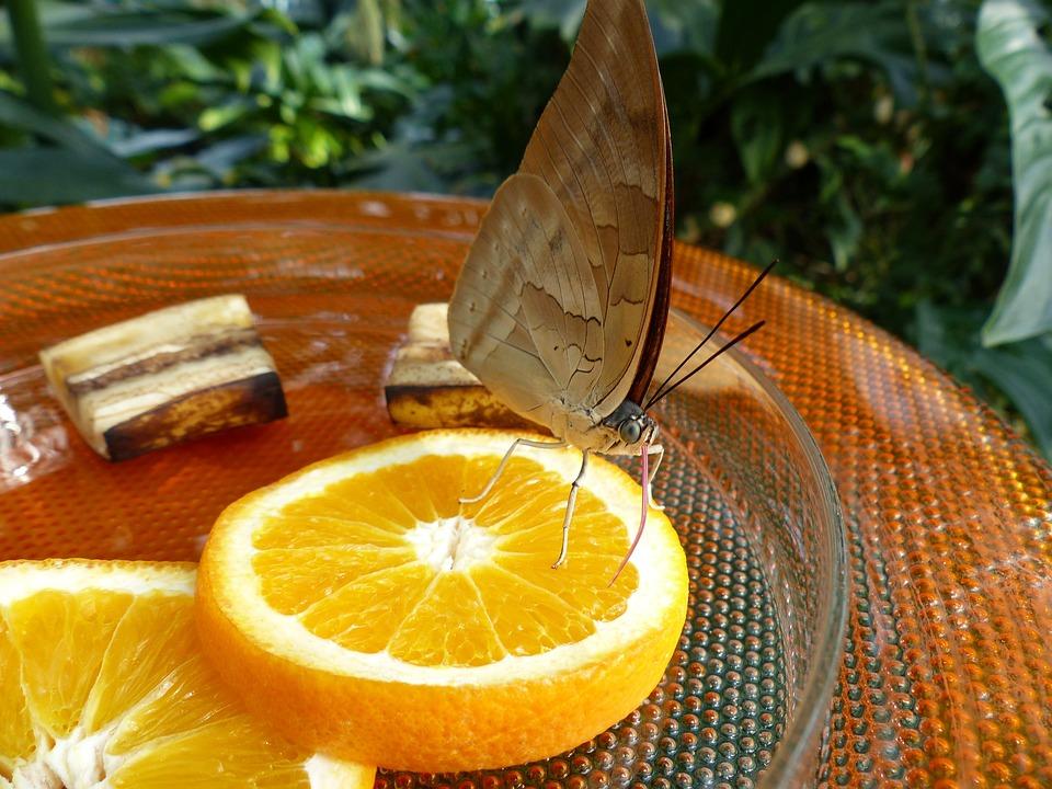 Schmetterling Futterung Kostenloses Foto Auf Pixabay