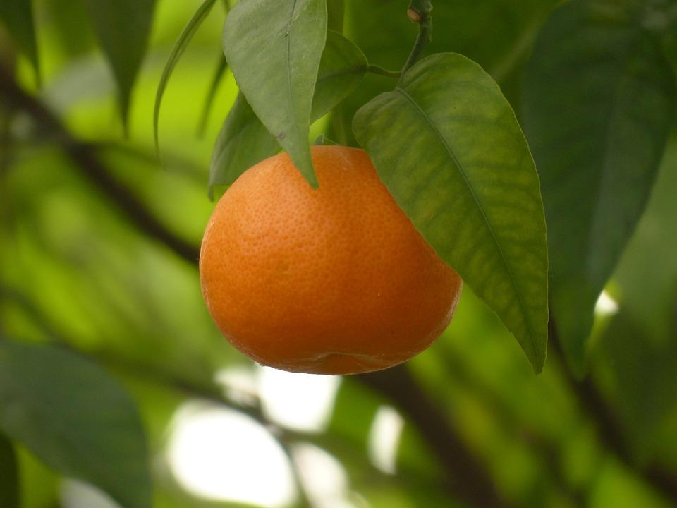 healthy fruit combinations mandarin fruit
