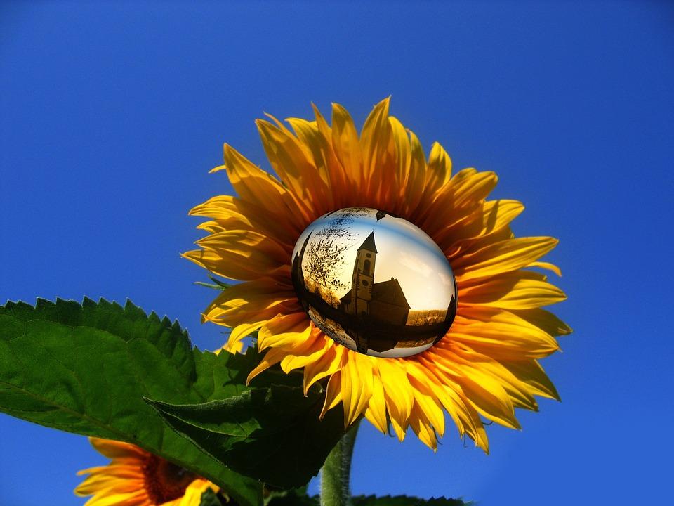 Free Photo Sun Flower Yellow Flower Sky Free Image