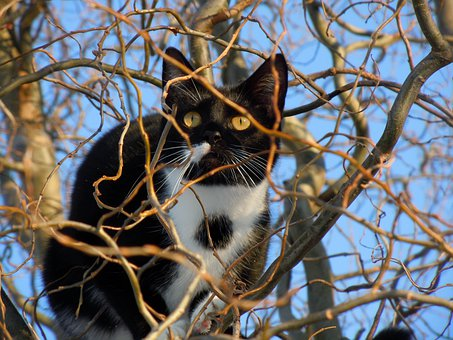 Cat, Hidden, Animal, Climb, Tree