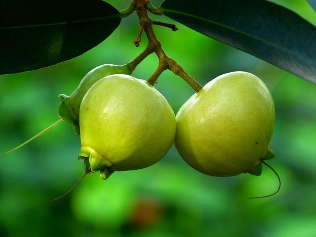 Photo Gratuite  Pomme Rose  Fruits  Arbre  Feuilles