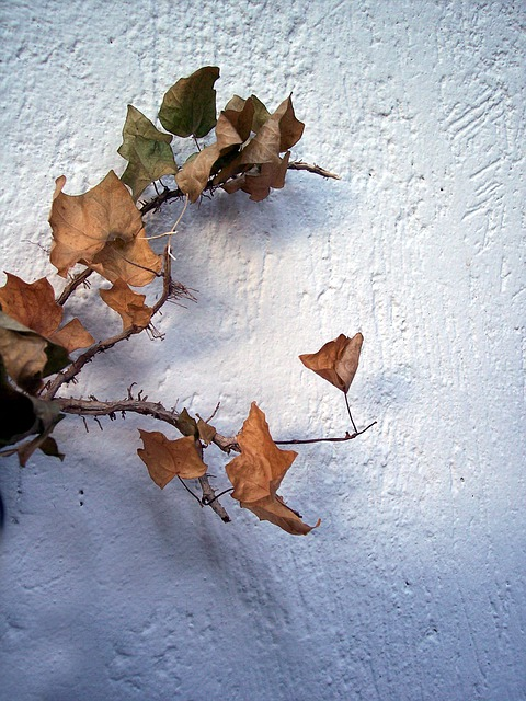 Autumn Leaf Tree ·...