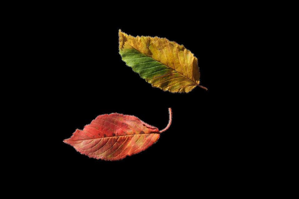 Beech Leaves, Leaves, Beech, Fall, Multicoloured