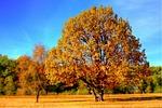 drzewo, upadek, upadek kolorów