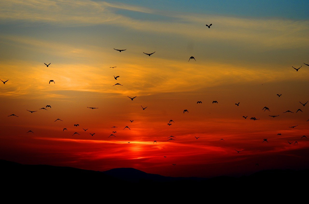 A ruby red sunset is the backdrop for the silhouette of birds flying in the evening sky.
