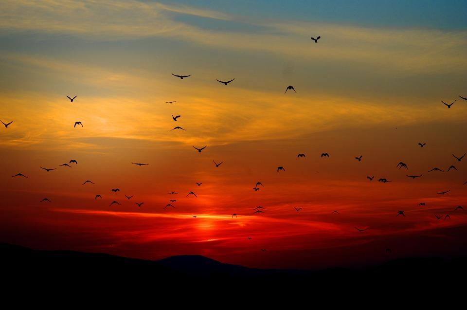 Burung yang melakukan migrasi
