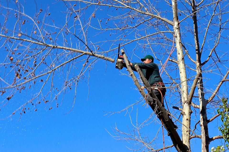 Cómo debe hacerse la poda de los árboles